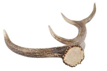horn on white background