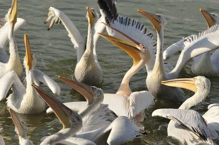 discord: pelicans