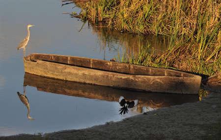 heron on boat Stock Photo - 13167297