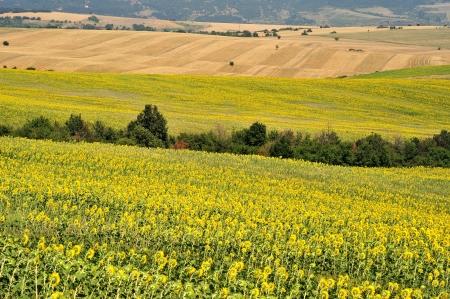 arable: landscape of arable land