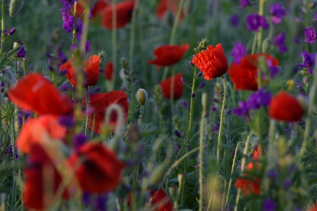 Wild flowers in different colors