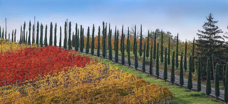 lambrusco: Colored road of cypresses Stock Photo