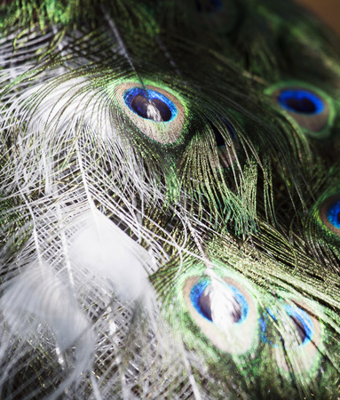 particular: Particular of a white peacock Stock Photo