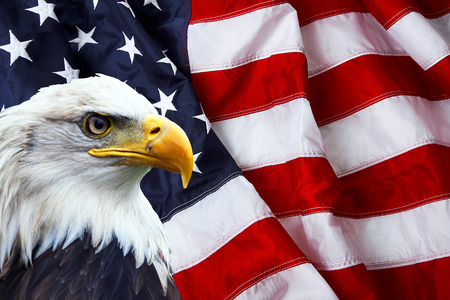 North American Bald Eagle on American flag Stock Photo