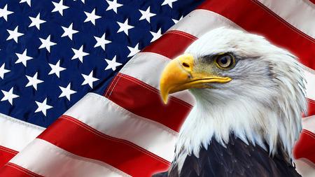 halcones: Norteamericano Eagle calvo en bandera de Estados Unidos Foto de archivo