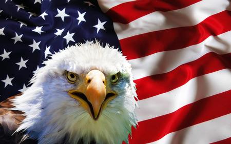 North American Bald Eagle on American flag Foto de archivo