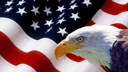 halcones: North American Eagle calvo en bandera de Estados Unidos.