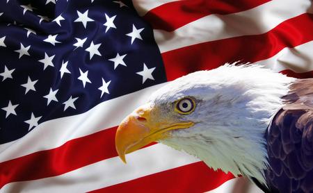 aguila calva: North American Eagle calvo en bandera de Estados Unidos.