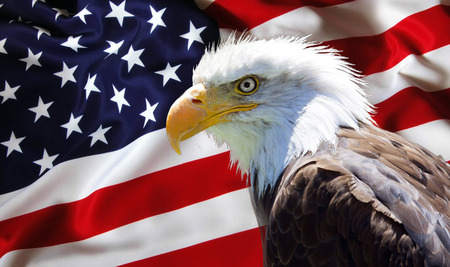 Achtergrond, behang - Noord-Amerikaanse Bald Eagle op de Amerikaanse vlag