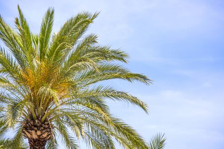 Palm tree against blue sky. Background with place for text. Stock Photo