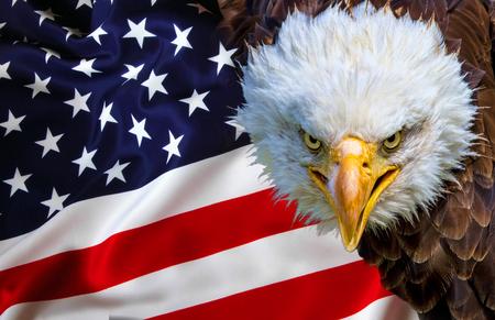 Angry north american bald eagle on american flag. Stock Photo