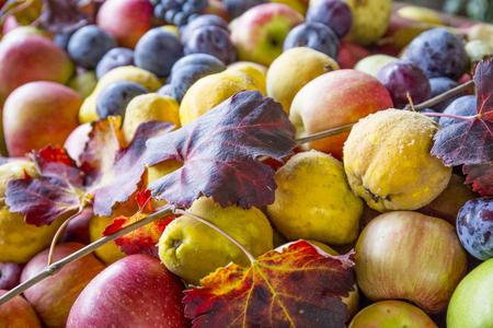 Autumn fruit. Pears, apple and grapes. Autumn harvest.