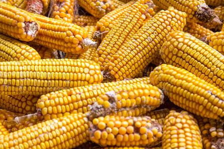 A pile of corn cob, top view. Stock Photo