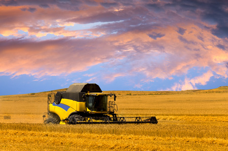 reaping: Reaping machine or harvester combine on a wheat field with a very dynamic sky as background