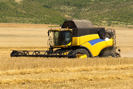 reaping: Reaping machine or harvester combine on a wheat field
