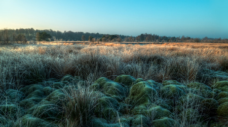 morning light on a swamp with moss