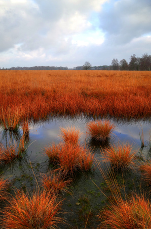Cloudy day at a swamp with red grass