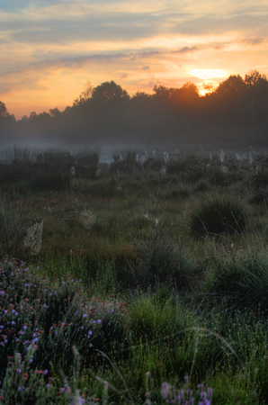 sunlight on a field in a swamp