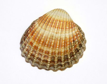 Exotic shell Banque d'images