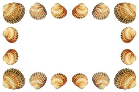Empty frame made out of shells Stock Photo - 2822853