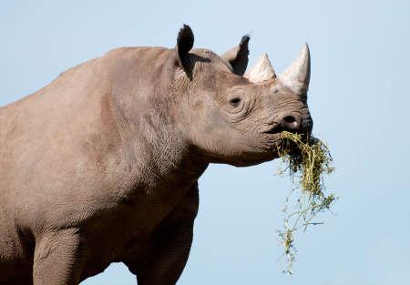 A close up of a Rhinoceros