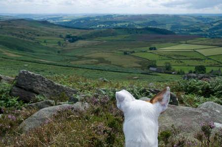 Dogs Eye View Stock Photo