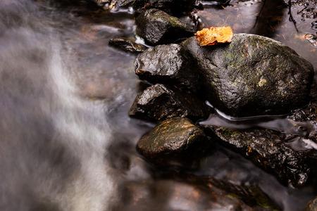 lonley: Lonley leaf on a rock by a small forest strem