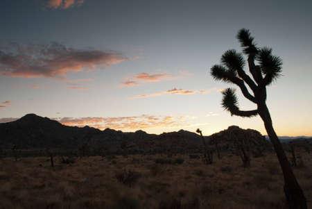 joshua tree national park: Sunset in Joshua Tree National Park Stock Photo