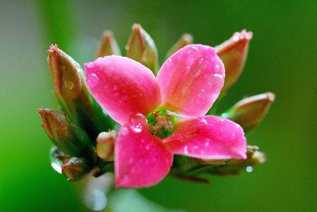 begonia: Esto es muy hermosa begonia  Foto de archivo