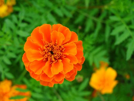 Nature of some beautiful flowers photo