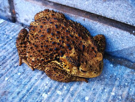 Predatory insects in the field of large toad Stock Photo - 5400549