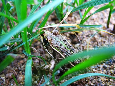 Beneficial insects in the field of small frogs photo