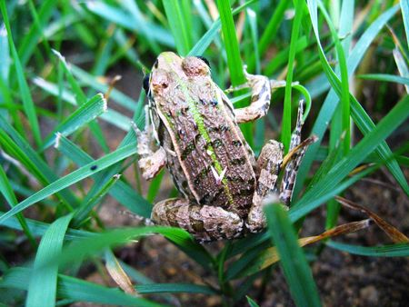 beneficial: Beneficial insects in the field of small frogs Stock Photo