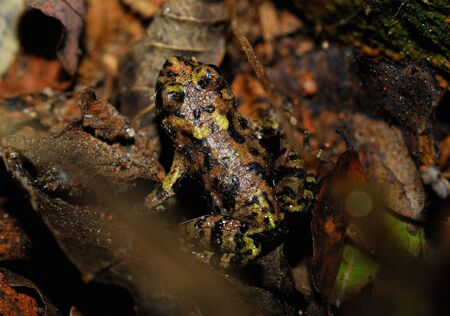 part frog: Predatory insects in the field of large toad Stock Photo