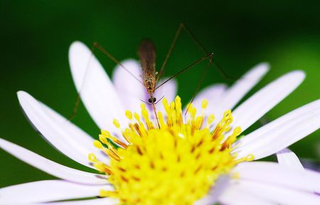 Nature of the pest mosquito Stock Photo - 5502565