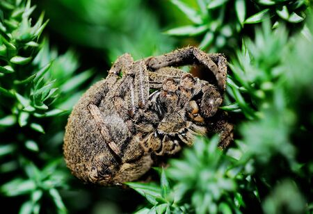 A variety of spiders in nature photo