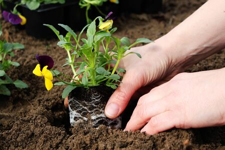 flowers are planting