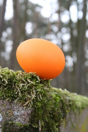 orange Easter egg in the wood Stock Photo - 12622868
