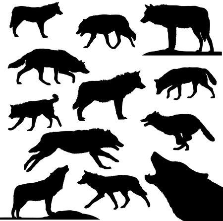 lupus: Wolves - vector collection