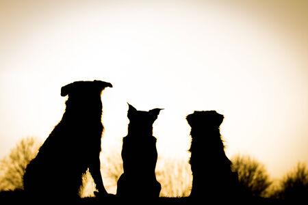 animal silhouette: Dogs