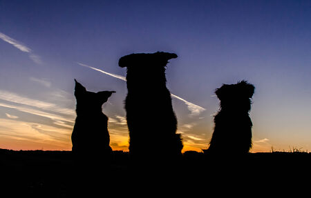 Dogs silhouette photo