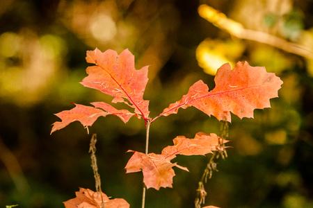moods: Autumn Moods Stock Photo
