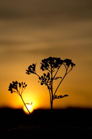 nature silhouette: Nature Silhouette Stock Photo