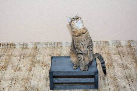 wooden crate: A cat sitting on a wooden crate and looks upwards