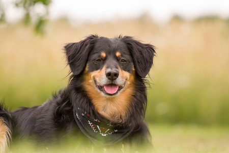 attentive: Dog looks cheerful and attentive