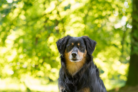 attentively: Dog looks attentively at the camera