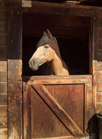 Louisville, Kentucky, Verenigde Staten, juli 2015: bruin baai paard uitzicht op de stal in een schuur