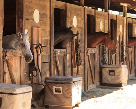 Louisville, Kentucky, United States,  July 2015: Brown bay horse view out the stable in a barn