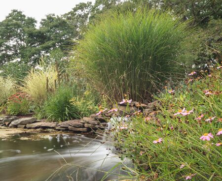 cape cod home: Plant life and a waterfall in a pond in New England on Cape Cod in summer.
