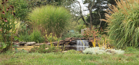 ornamental garden: Plant life and a waterfall in a pond in New England on Cape Cod in summer.